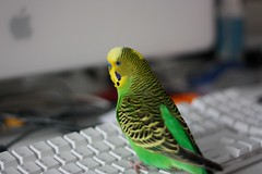 Computer Budgie II