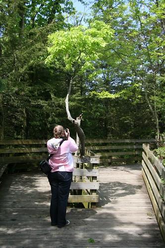 Tree Photo Taking