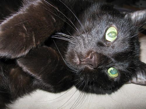 Joie Cat