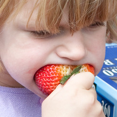 "Big strawberry, little mouth • <a style=""font-size:0.8em;"" href=""http://www.flickr.com/photos/54494252@N00/3524708438/"" target=""_blank"">View on Flickr</a>"