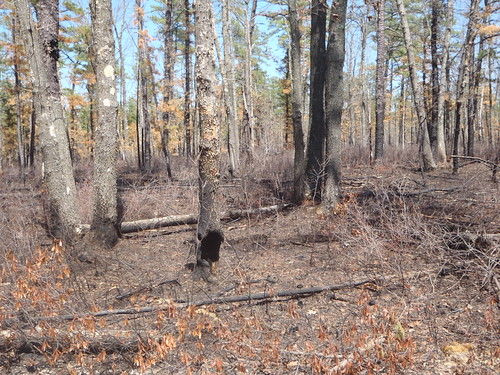 The forest needs fires to regenerate