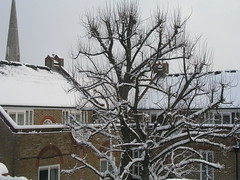 Snowy tree and rooves, 2 Feb 2009