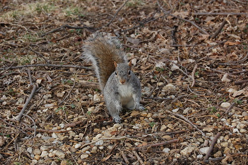 Finding the acorns from fall