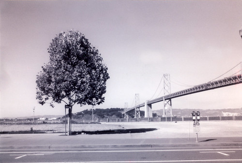 bay bridge tree