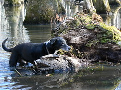 Merchant's Millpond State Park - Lassiter Swamp - Jimmie with Mossy Log