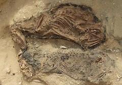 AERA Dog Mummies