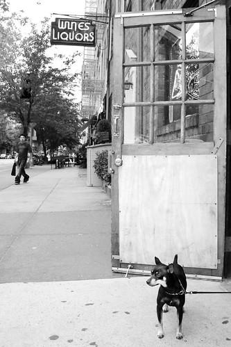 Guard Dog 111/365