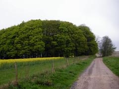 On the Ridgeway