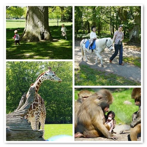 Knuthenborg Safaripark - mosaic