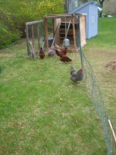 Chicken Coop Remodel - Dwell Abide Adorn