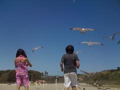 Kids Feeding Seagulls