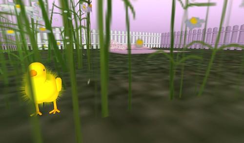 Baby chicken!!