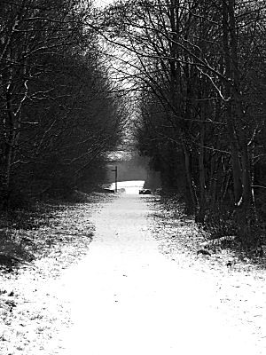 from intense colour to black and white. This is part of the path i walk along, and it looks so nice in black and white...