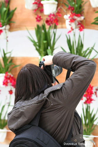 Orchideenausstellung Eisenstadt