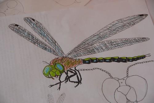 dragonfly by zak