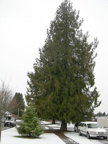 Big tree, little tree