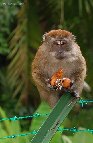 Monkey stealing