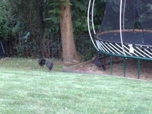 There are intruders in the backyard!