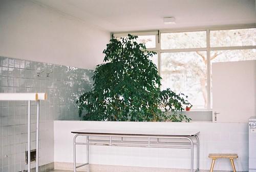 Waschhaus tree