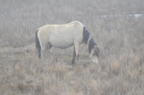 Ponies in the fog