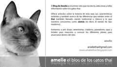 Copie de propuesta-amelie