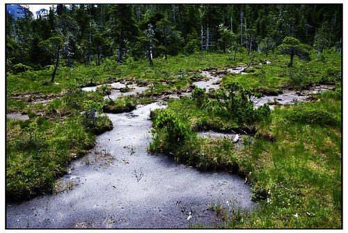 Tongass National Forest Alaska