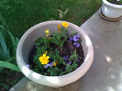 Purple Petunias and Mellow Marigolds
