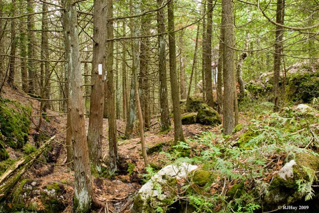 Bruce Trail at Lion's Head Point, Ontario