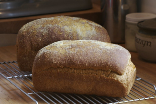 Anadama Bread - Loaves
