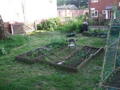 looking over beds 1 and 2 towards fruit beds