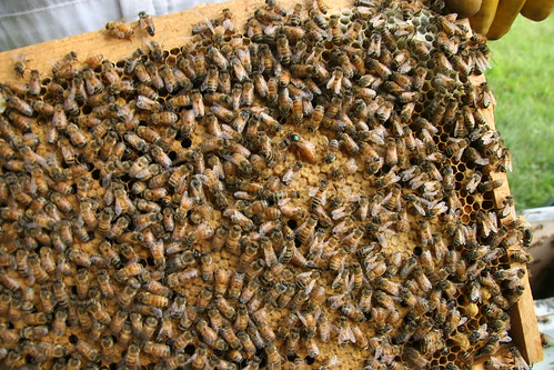 Queen bee 2 (green dot)