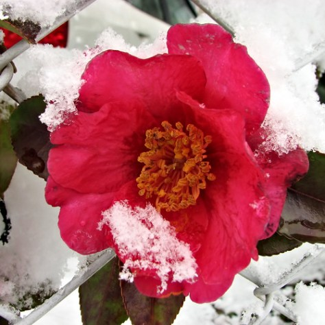 Snowy Day (by Mullenkedheim)