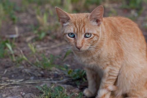 Resultado de imagen de lenguaje ojos gatos