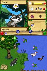 raccoonhide_bmp_jpgcopy