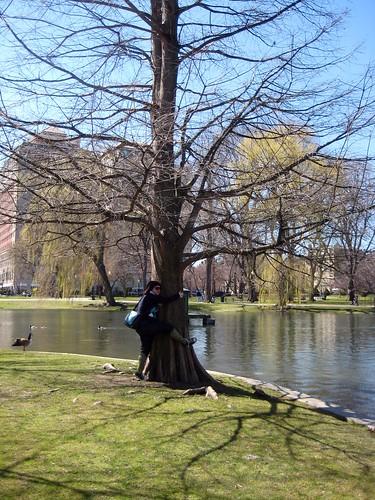 boston tree hugger