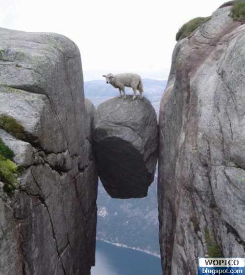 wm-dangerous-sheep