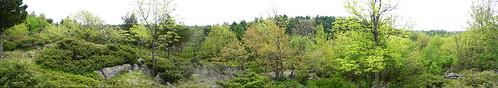 successionalforest