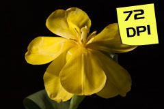72DPIFlower
