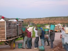 Under the H-2A program, farmworker jobs must be offered to domestic workers before an employer can hire temporary foreign workers.