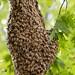 Beehive 1