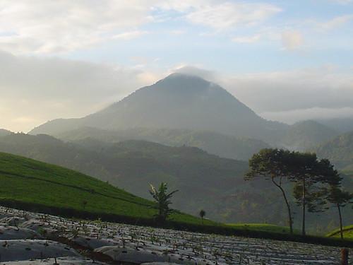 Desa Cibeber dan Tambak Ruyung