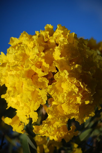 Yellow flower with a blue sky