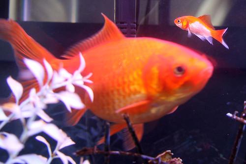 Big Fish & Littlest Fish