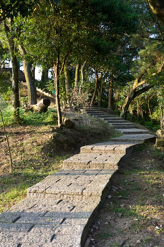 Tiger Mountain hiking trail.
