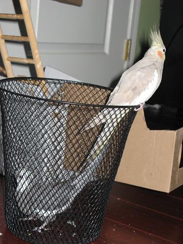 Birdies in a basket