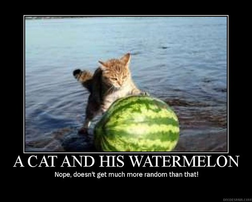 My Watermelons, Let Me Show You Them