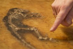 'Ida' fossil - the Missing Link
