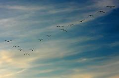 blue sky V
