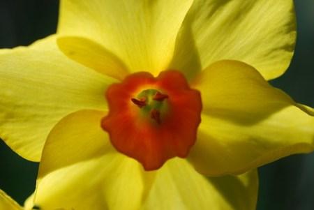 yelloworange_20090307_1.jpg