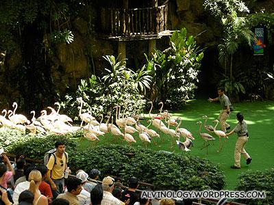 Herding back the flamingos